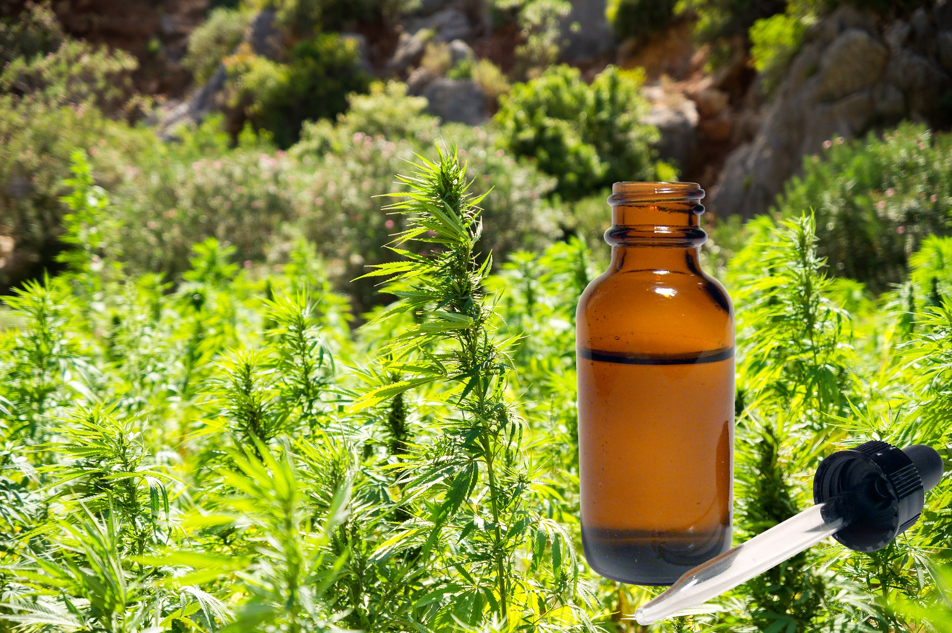 CBD Oil made from flowers, leaves, and stem of hemp plant
